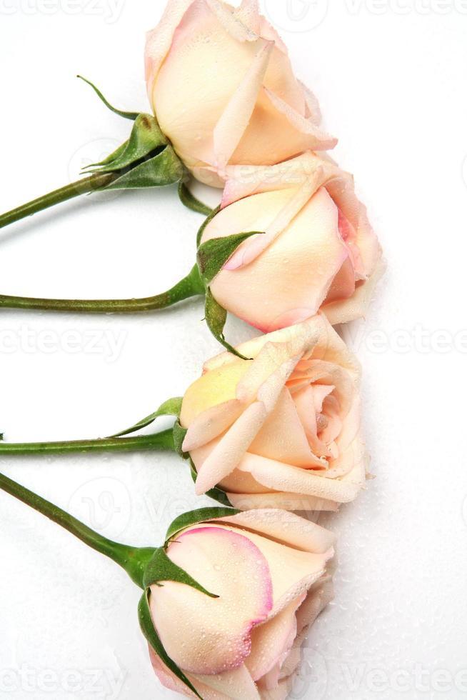 rosas sedutoras e gotas de água foto