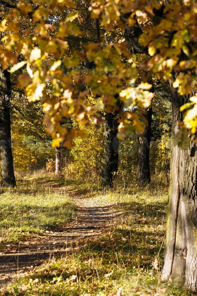 caminho do pé foto