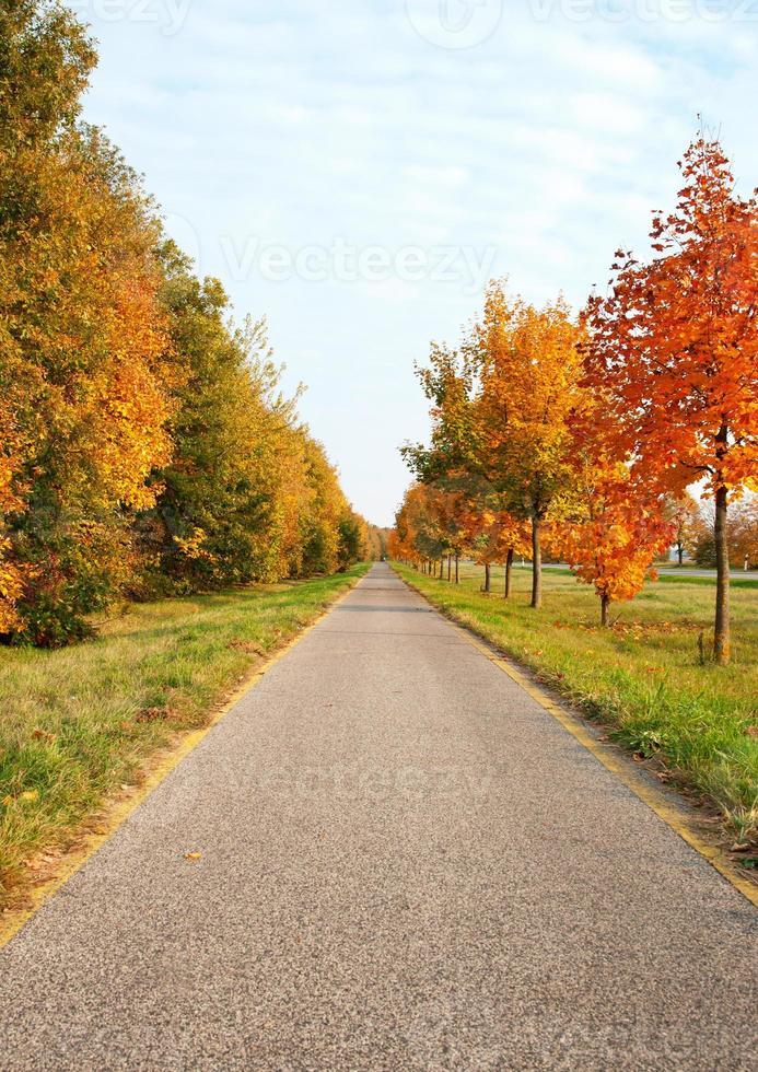 estrada de bicicleta leva através das árvores de outono foto