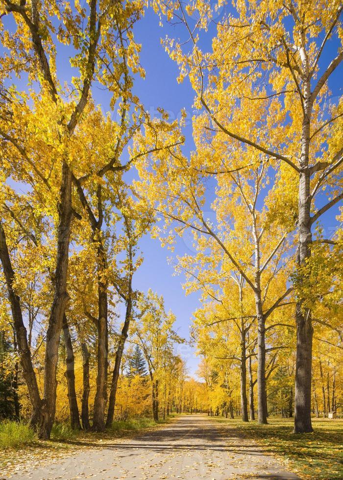 bela cena de outono com árvores coloridas foto