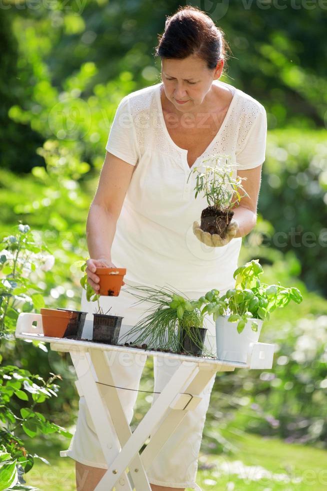 mulher plantando ervas no jardim foto
