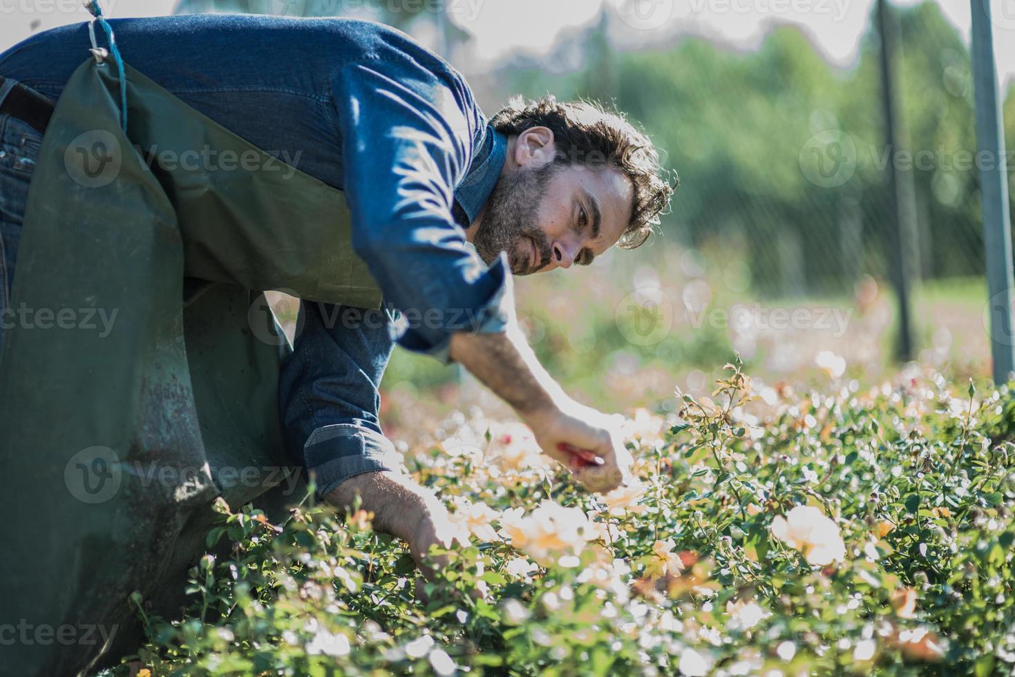 poda de jardineiro no berçário foto