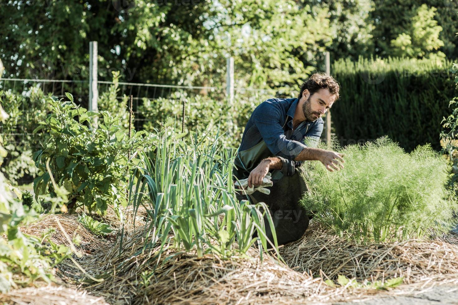 agricultura sinérgica foto