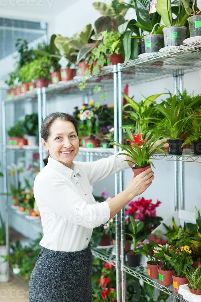 mulher escolhe guzmania na loja foto