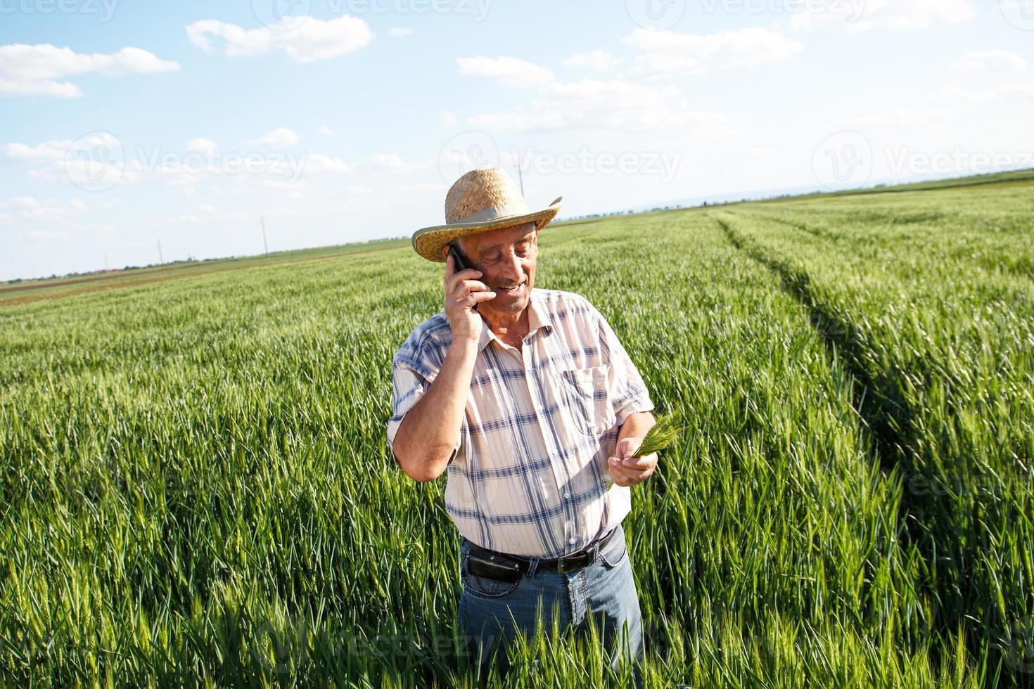 agricultor em pé em um campo de trigo e falando no telefone foto