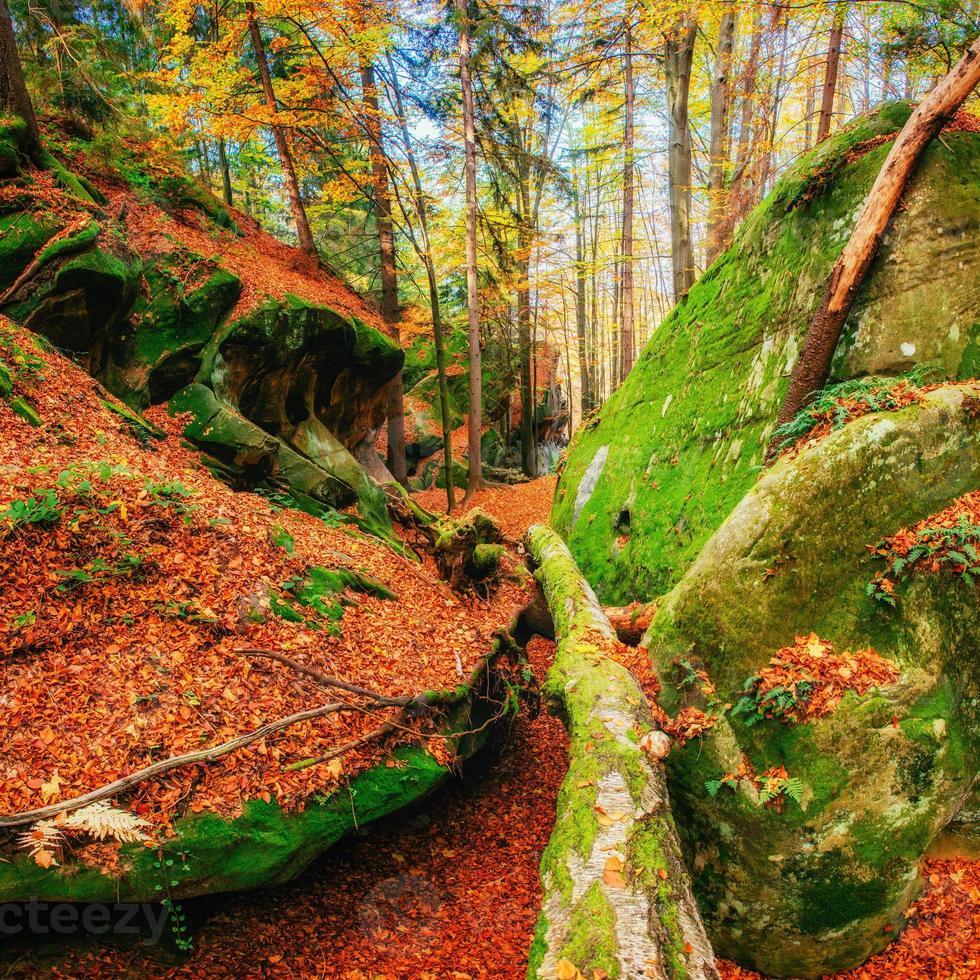 andando em terreno rochoso na floresta. carpathian, ucrânia, eur foto