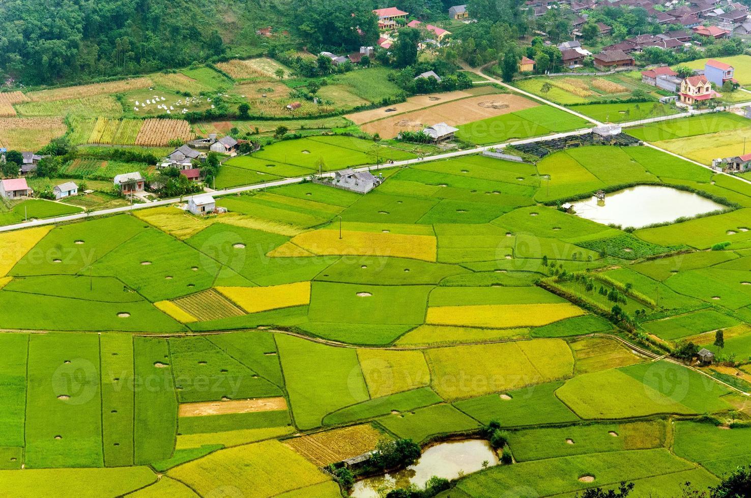 campo de arroz na época da colheita em bac son vale, lang son, vietnã foto