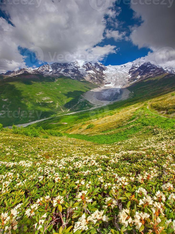 rododendros florescendo nas montanhas caucasianas. foto