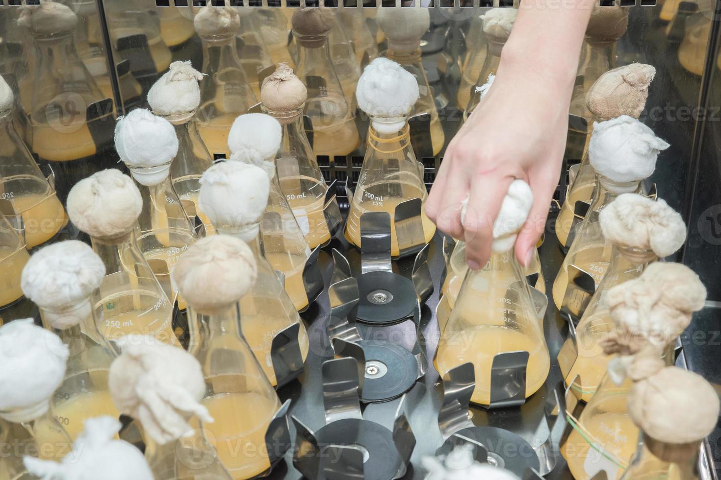 balão de cultura no agitador de tubos de ensaio de laboratório foto