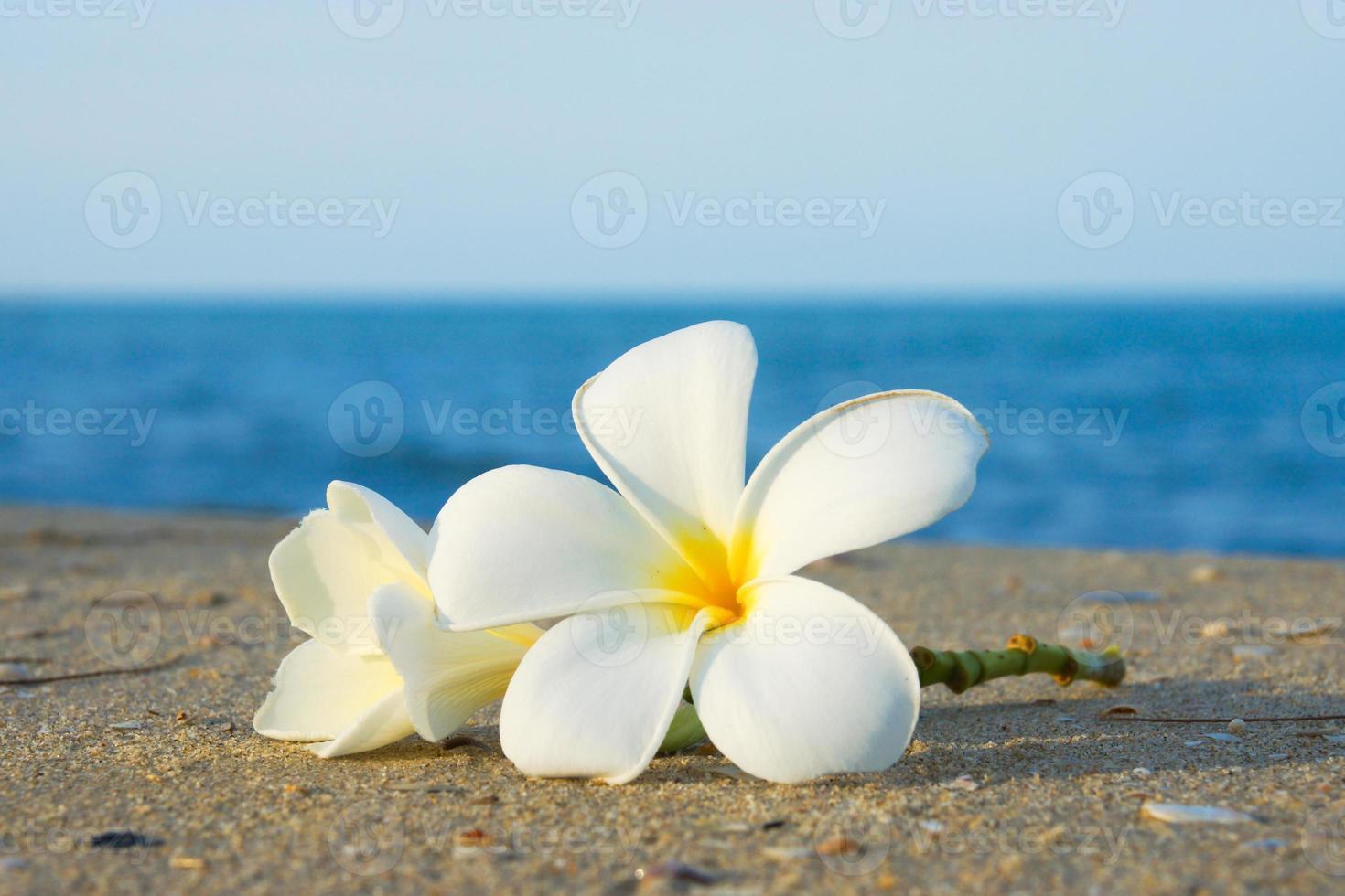 duas flores de plumeria na areia na praia foto