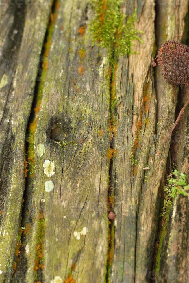 buracos no fundo madeira na floresta foto