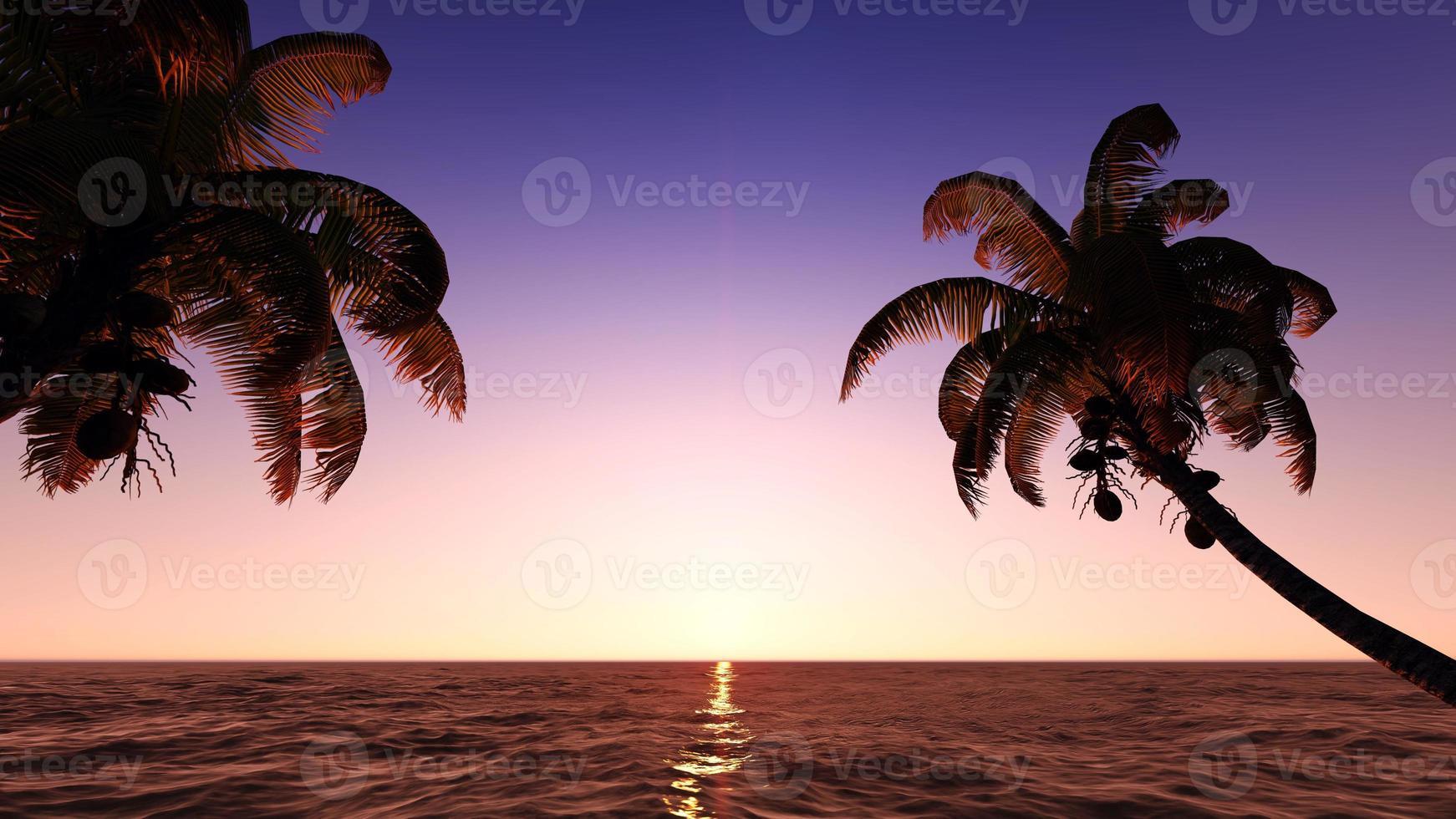 cocos na praia. foto