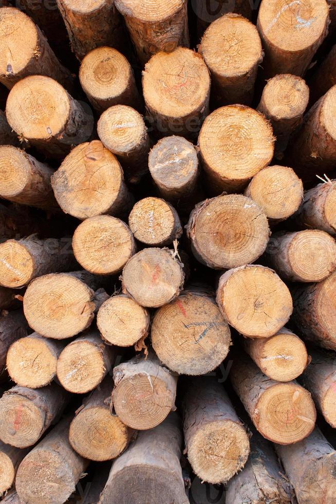 empilhados de madeira foto