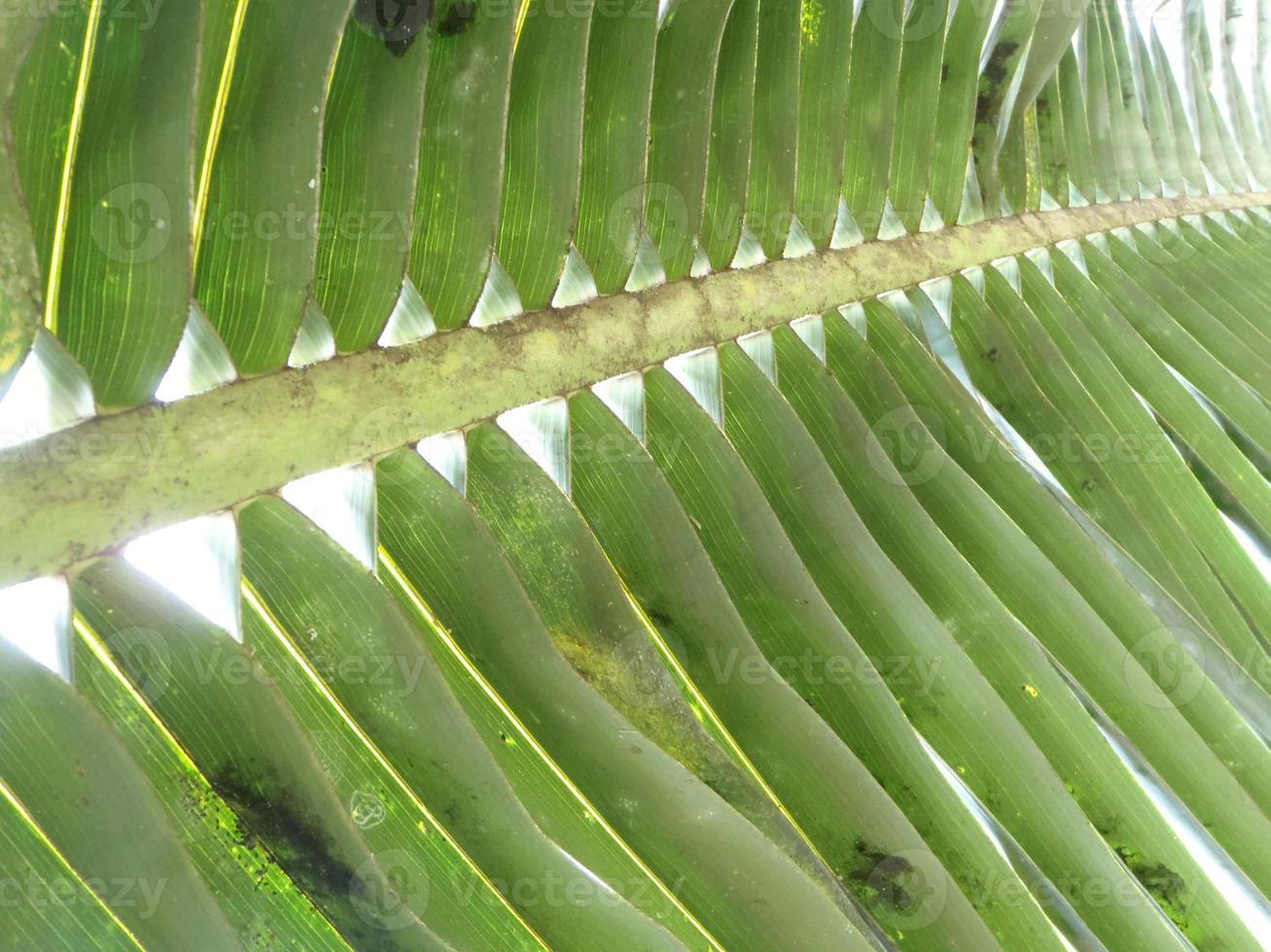 fechar detalhes de folha de palmeira foto