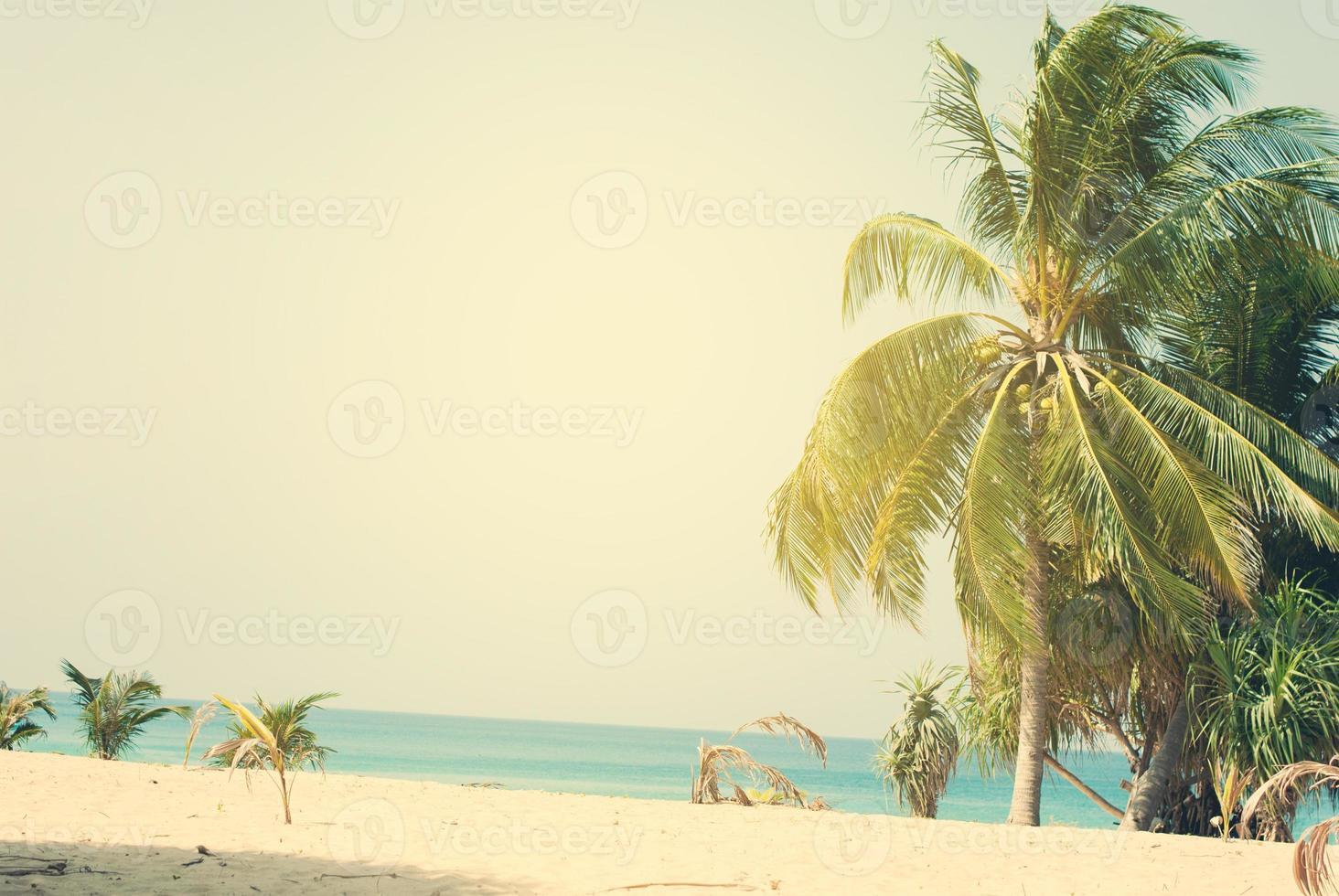 palmeiras iluminadas pelo sol na costa tropical foto