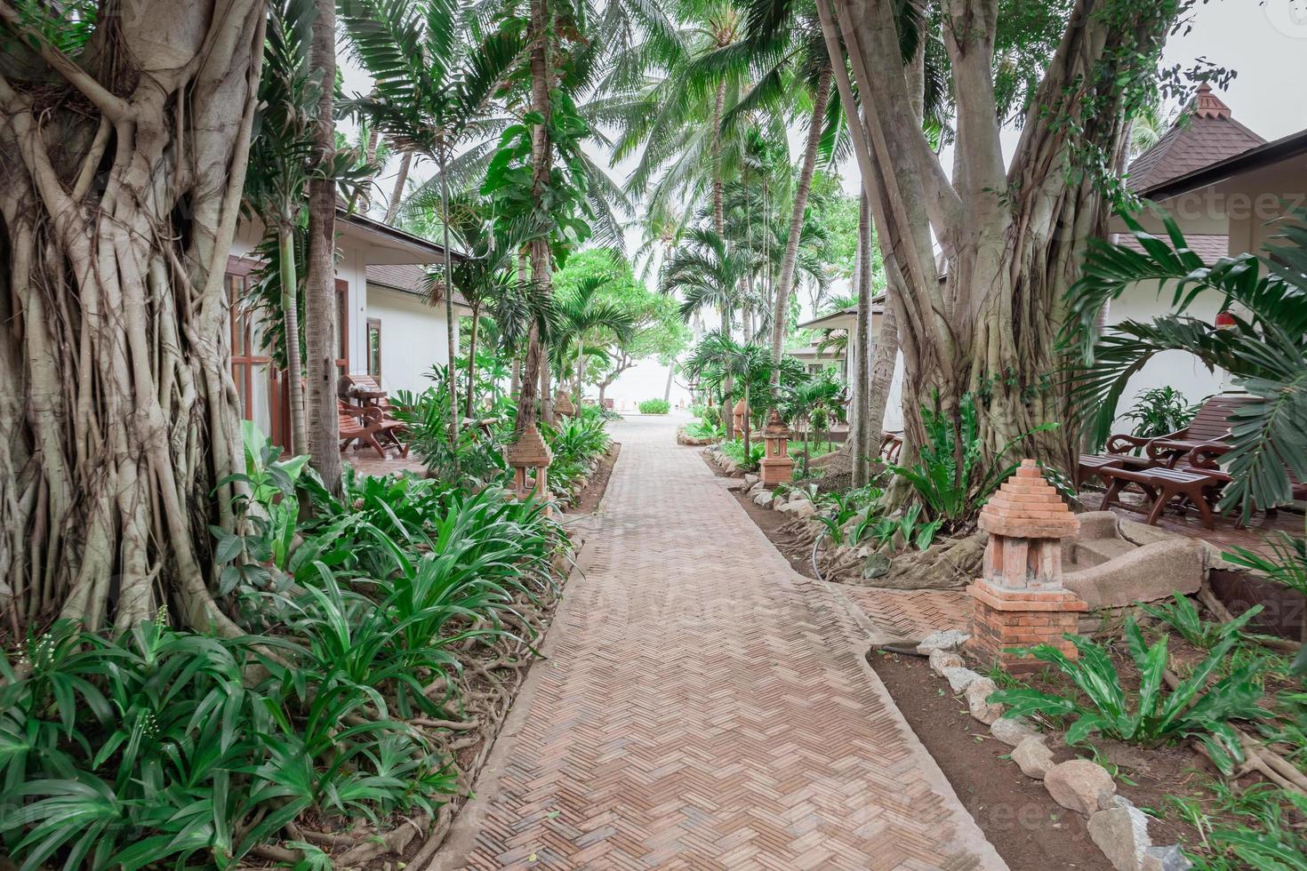 jardim tropical e o caminho para a praia do mar foto
