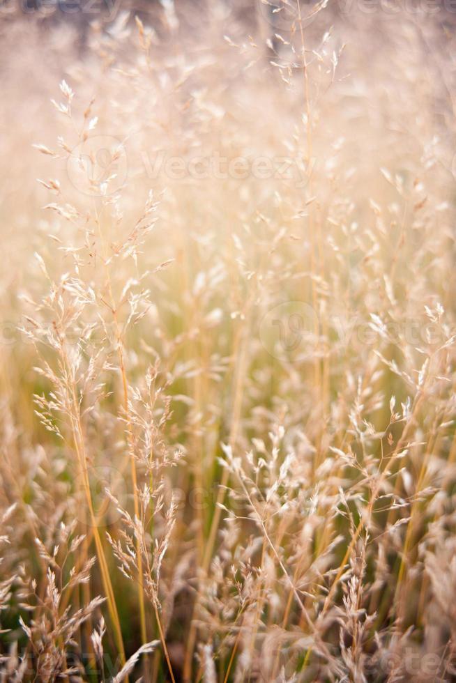 erva daninha delicada e grama na luz do sol da manhã foto
