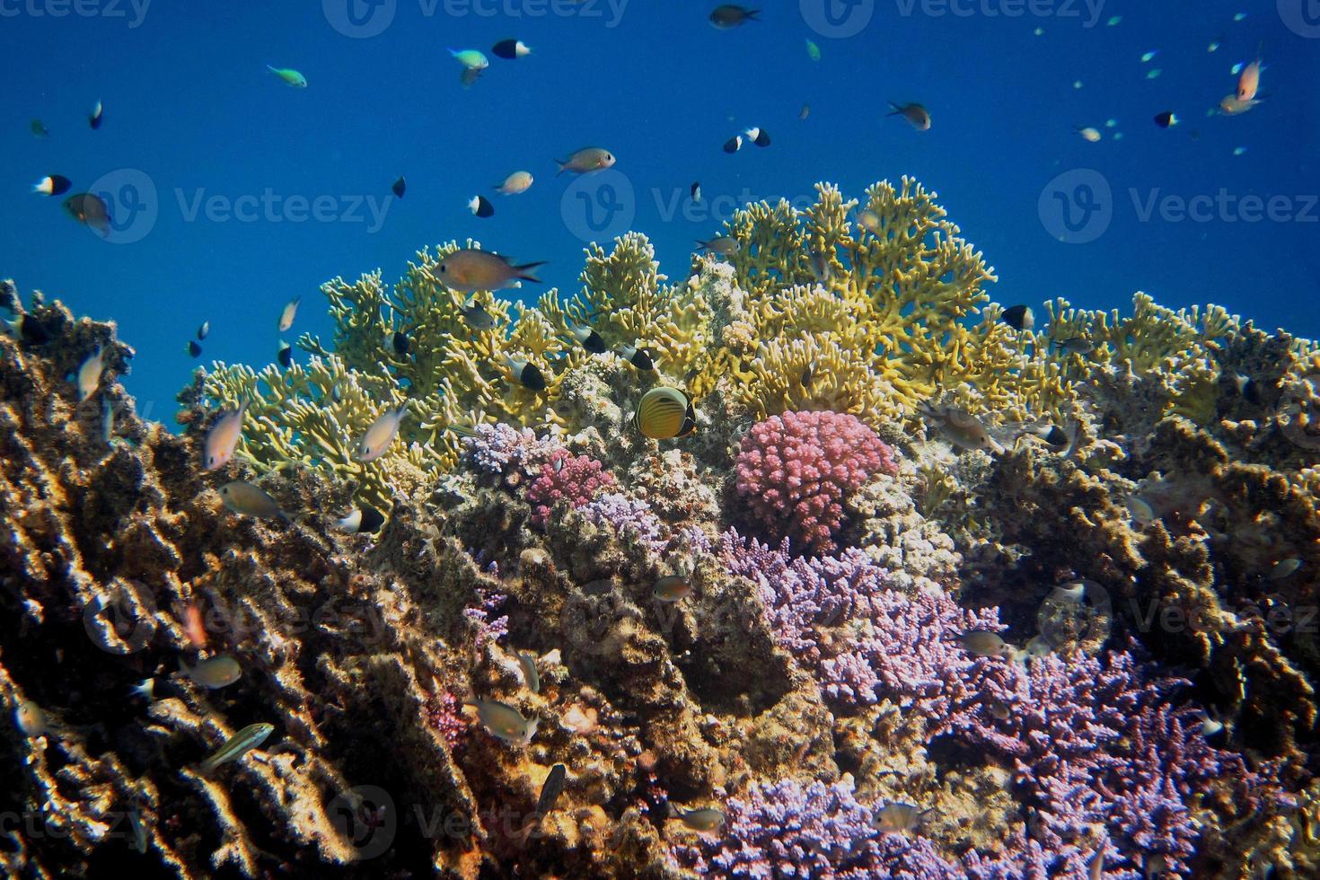 mundo coral colorido foto