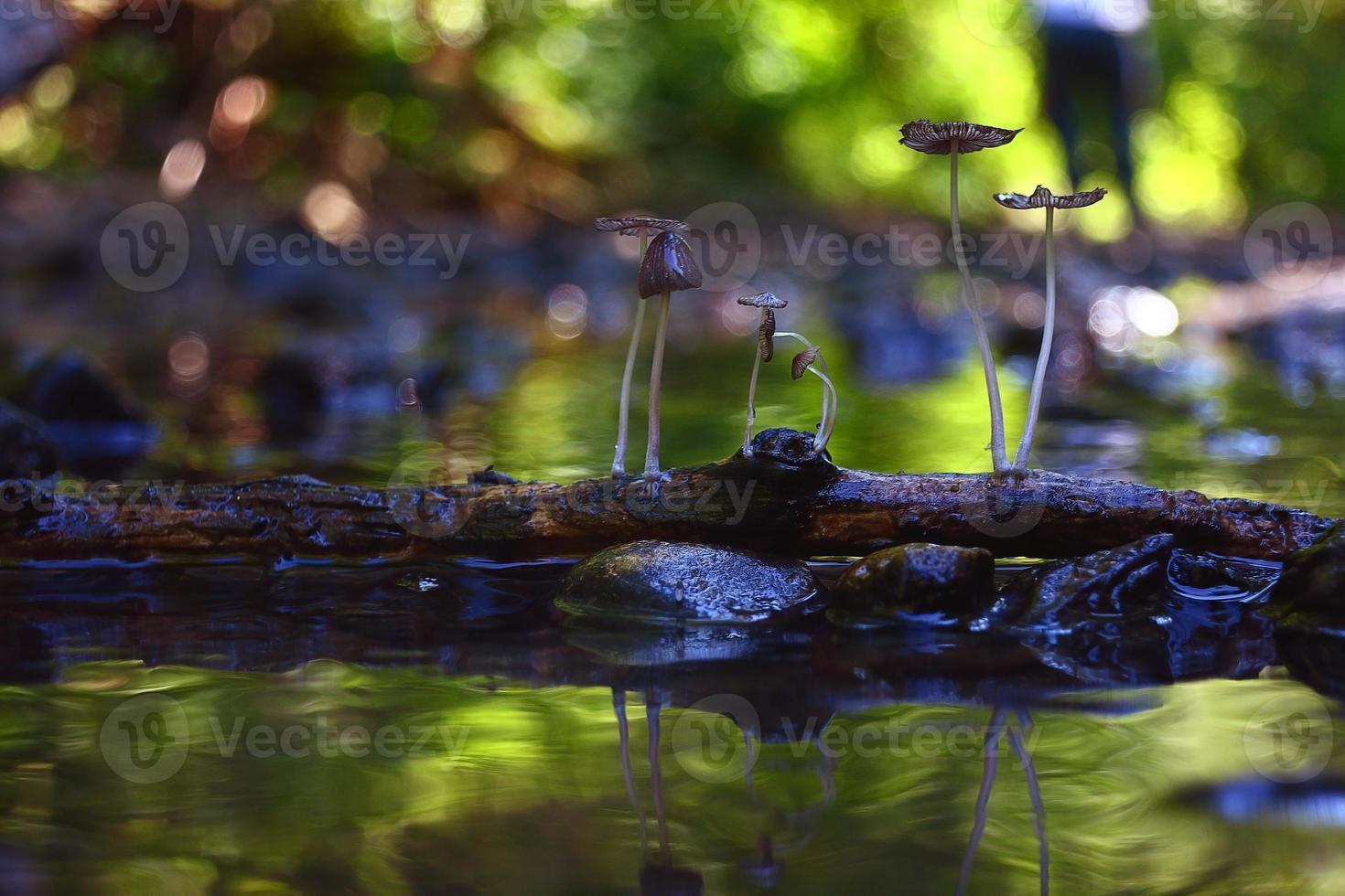 cogumelos pequenos cogumelos venenosos macro venenoso foto