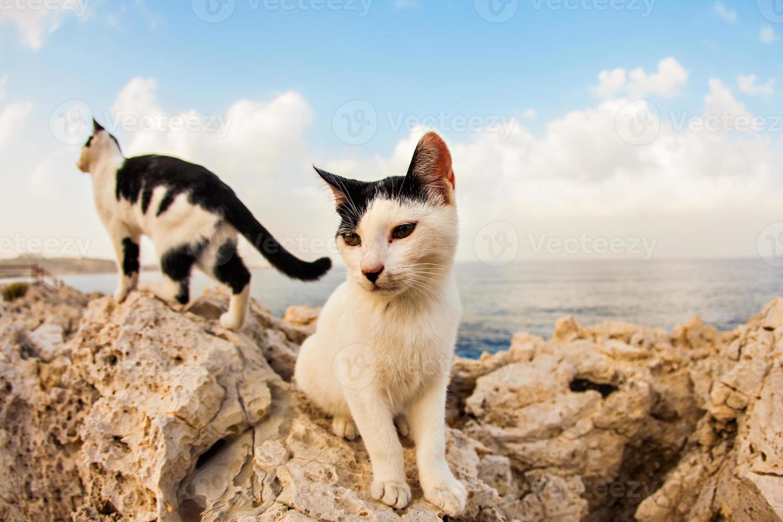 gatos na rua foto