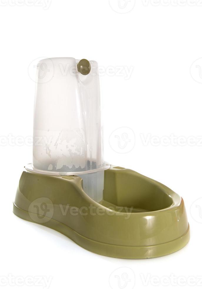 fonte de água potável para animais de estimação foto