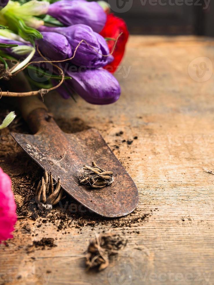 colher rústica witn bulbos de flores na mesa de madeira foto