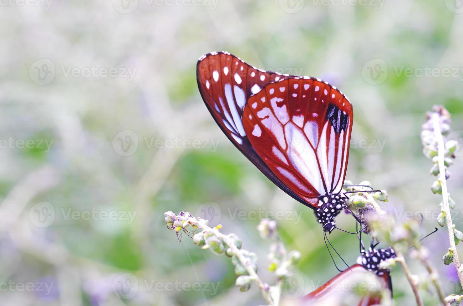 borboleta está bebendo comida foto