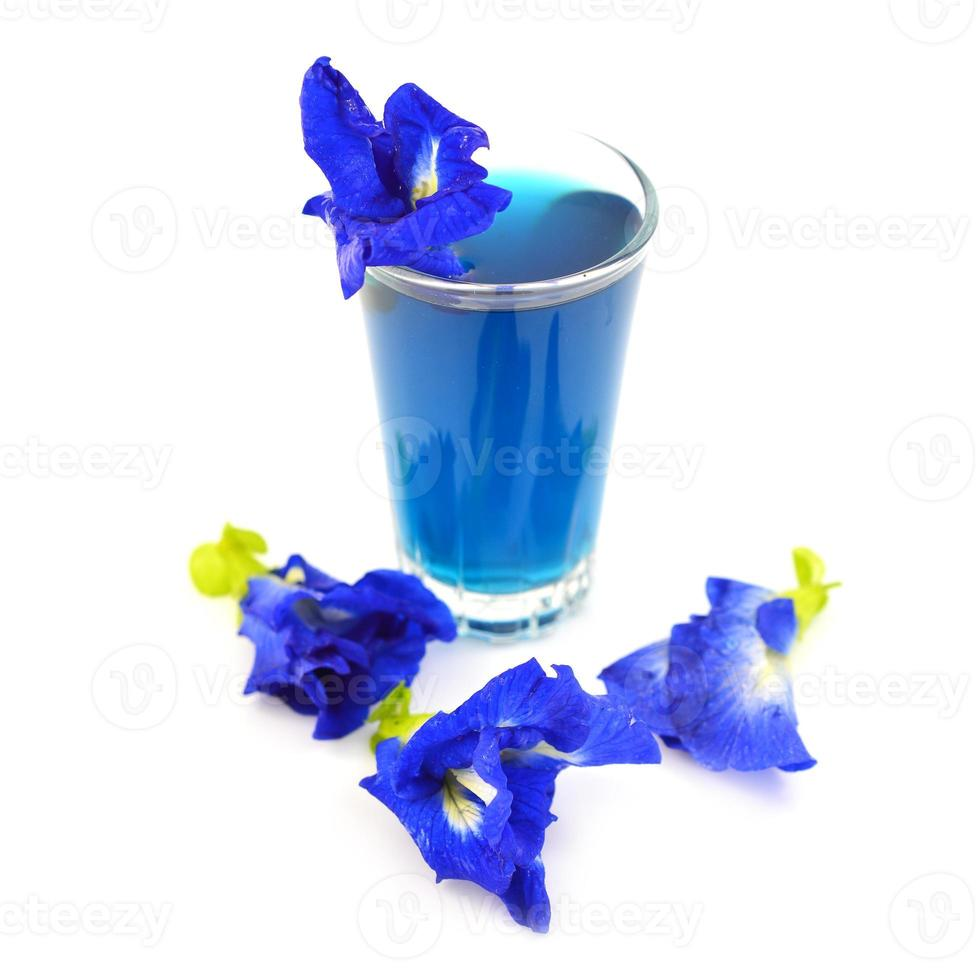 bebida da flor da ervilha de borboleta foto