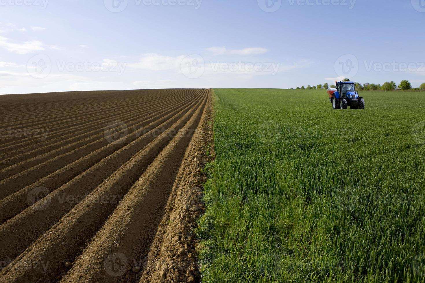trator no campo de trigo jovem ao lado do campo arado foto