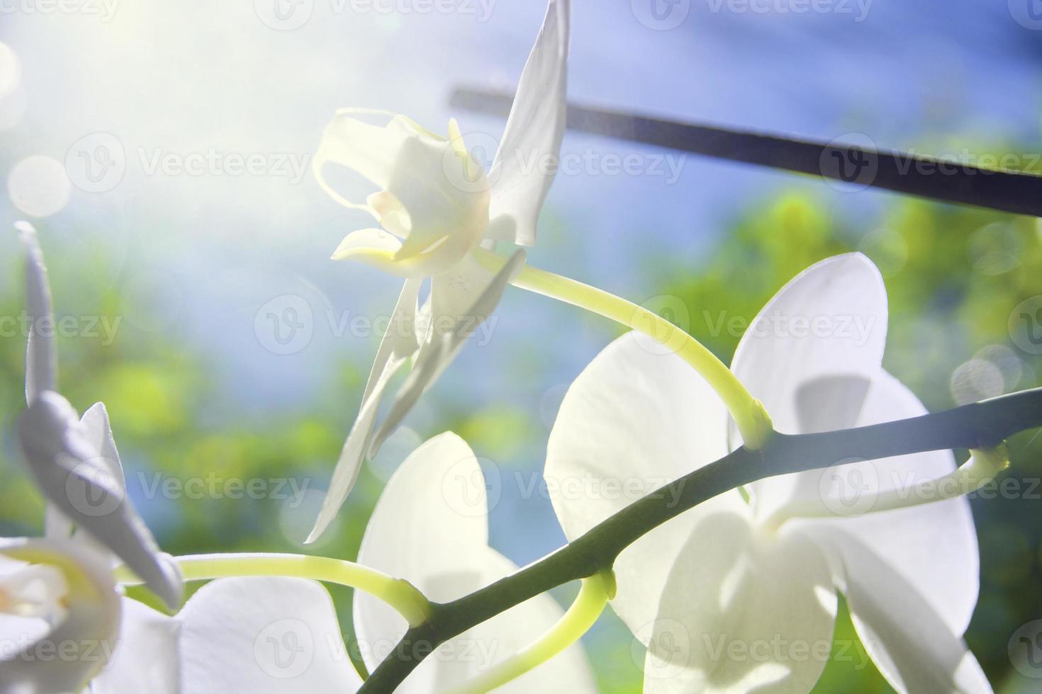 orquídea na luz solar foto