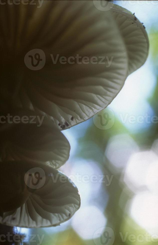 fungos, vale luxulyan, cornualha foto