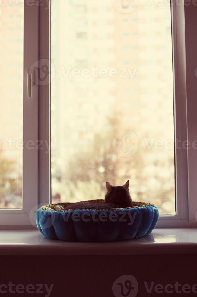 gato olhando pela janela foto