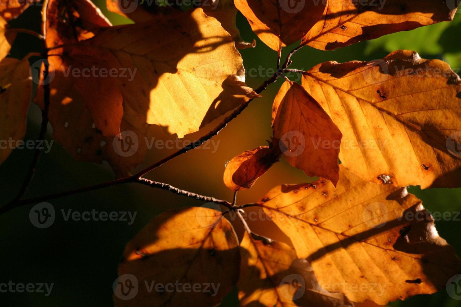 folhas de outono em contraluz foto