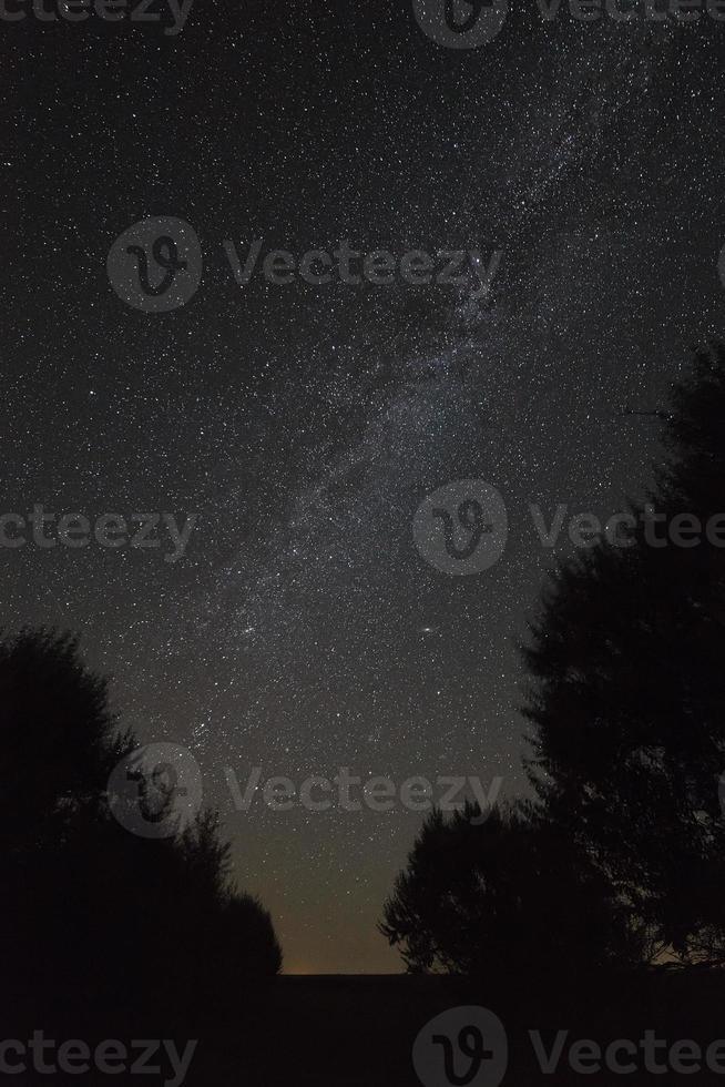 árvores em um fundo de céu noturno e Via Láctea. foto