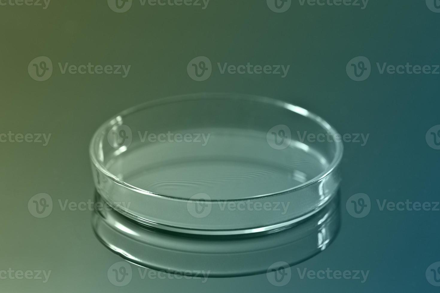 placa de Petri foto