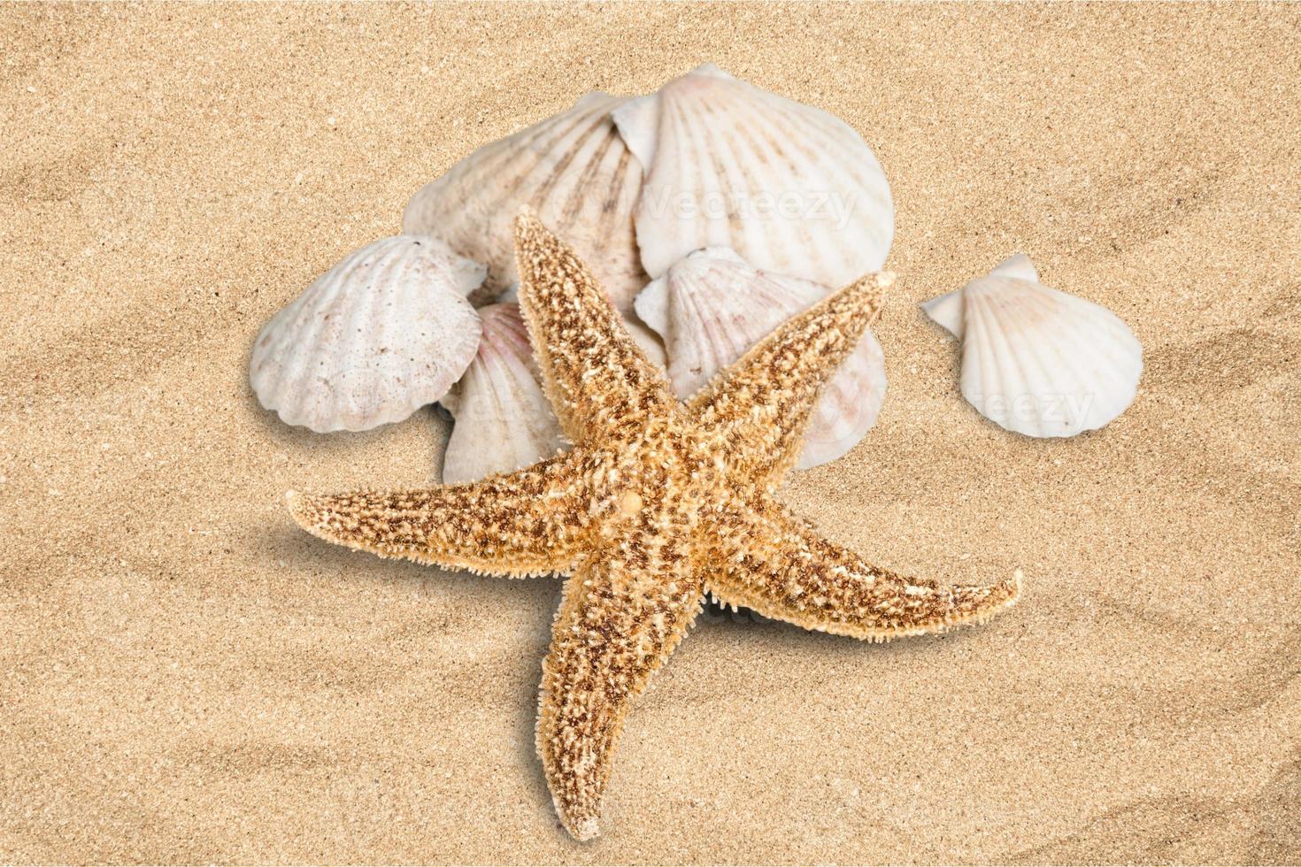 concha, estrela do mar, verão foto