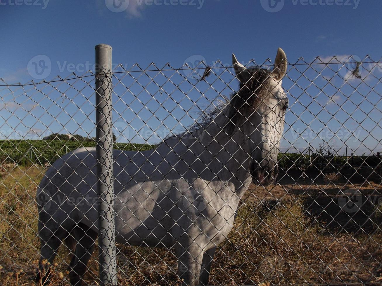 cavalo triste foto