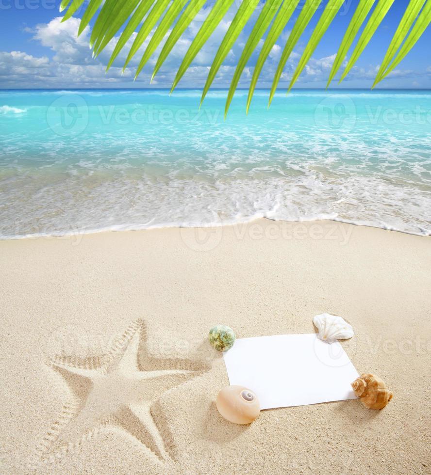 caribe praia mar cópia em branco espaço estrela do mar conchas foto