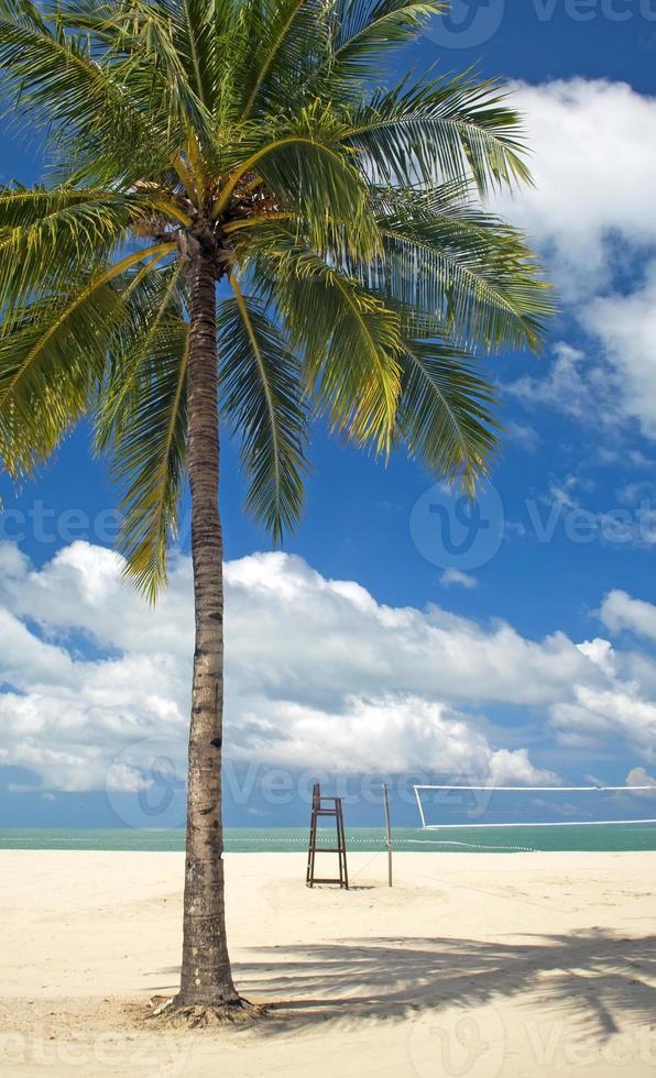 praia palmeira foto