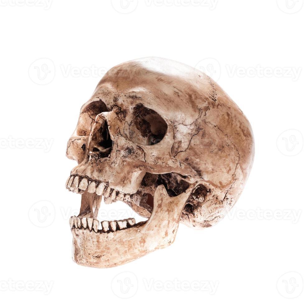 crânio isolado foto