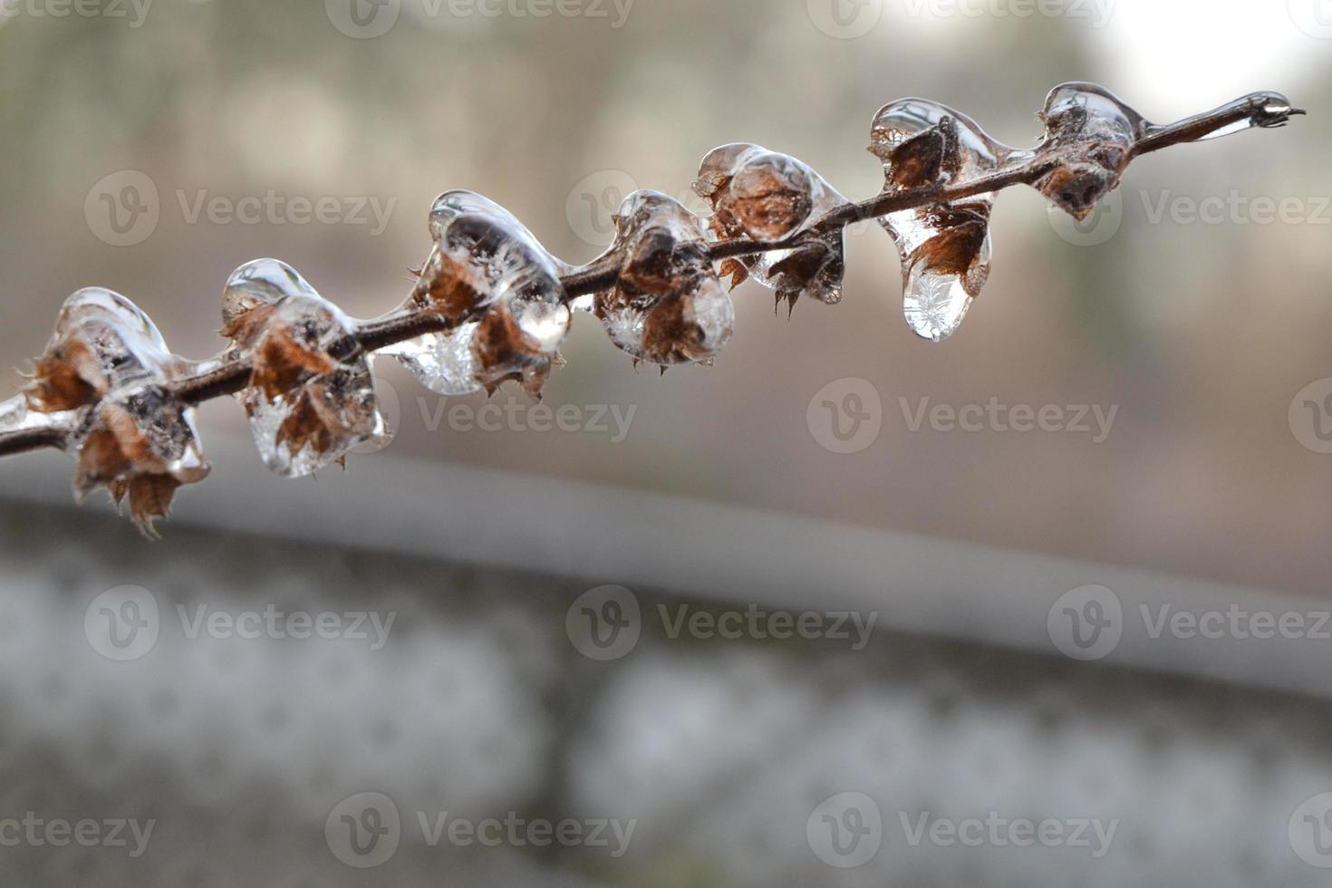 ramo congelado close-up foto