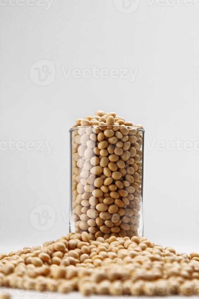 feijão de soja foto