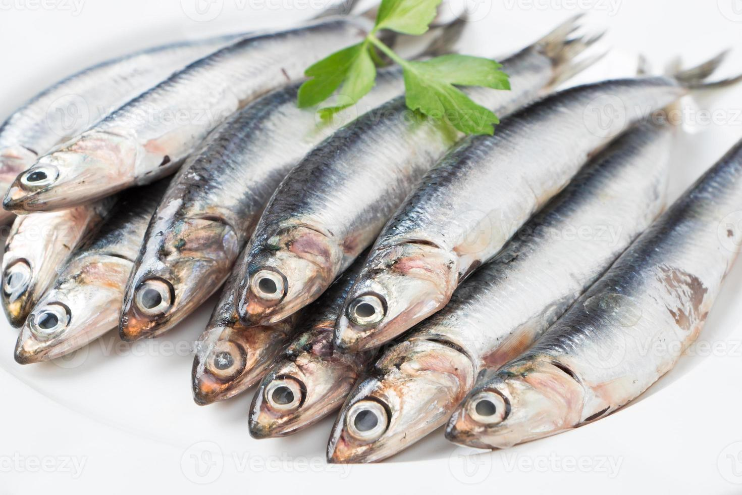 anchovas frescas close-up foto