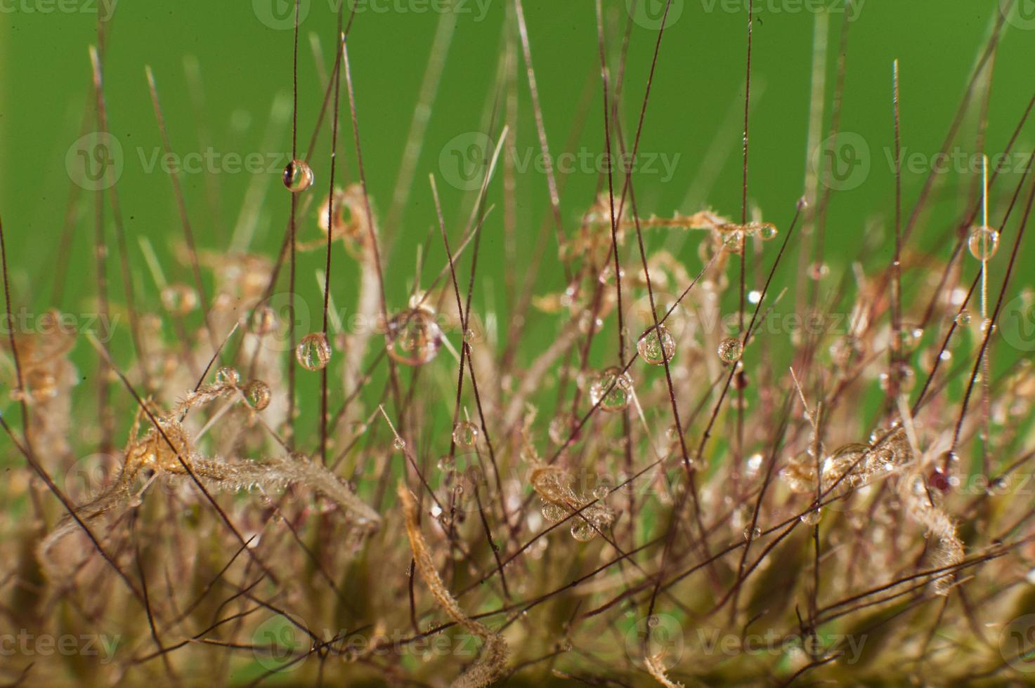 gotas de orvalho close-up foto