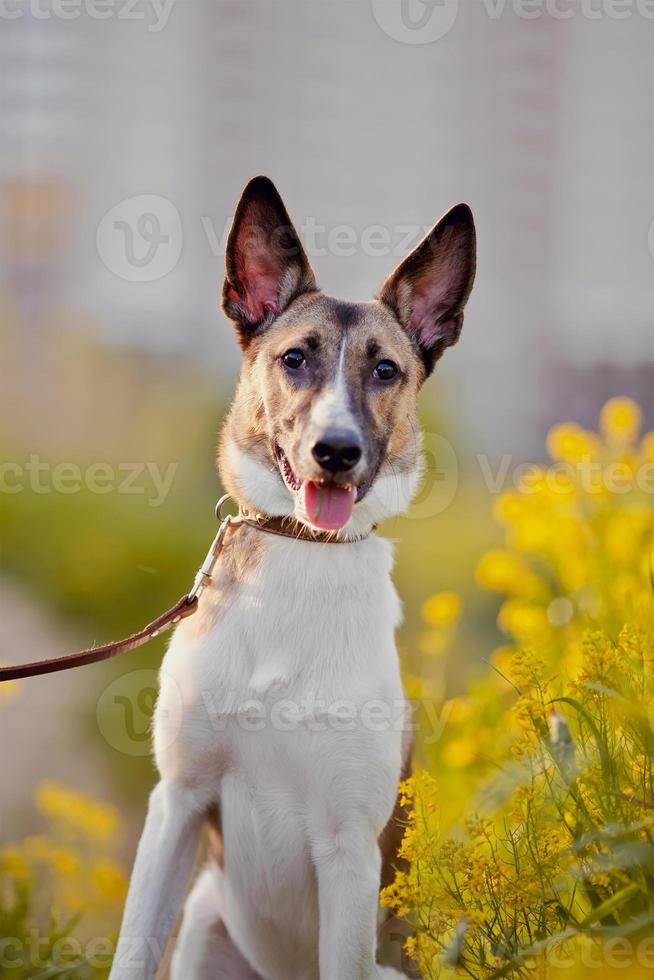 retrato de um cão doméstico em flores amarelas. foto