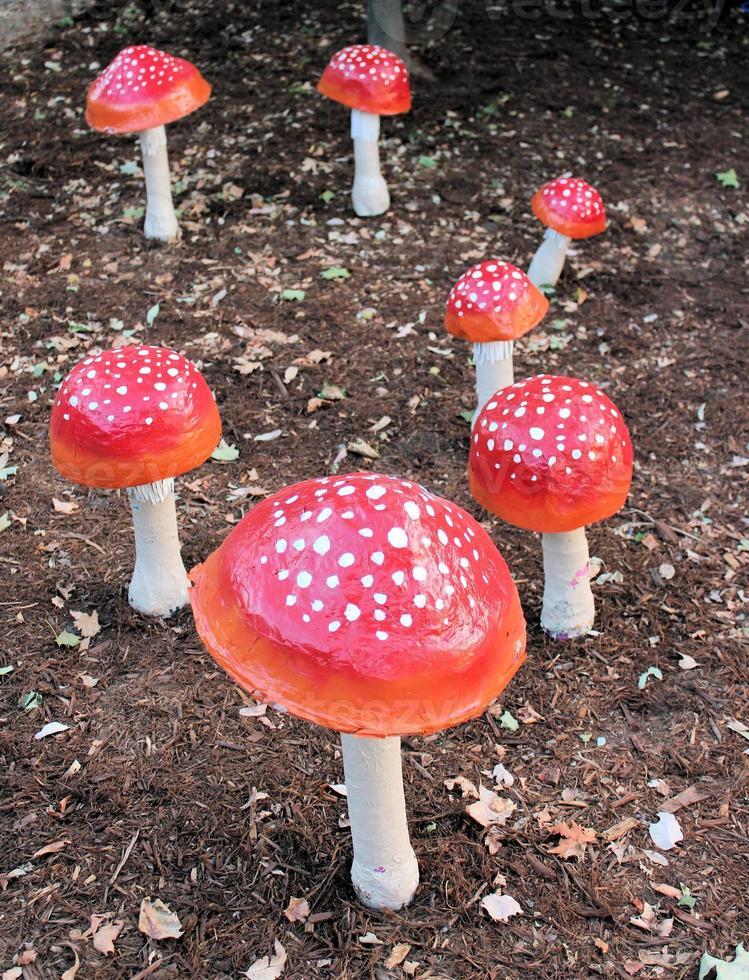 cogumelos de papel machê - chão nu foto