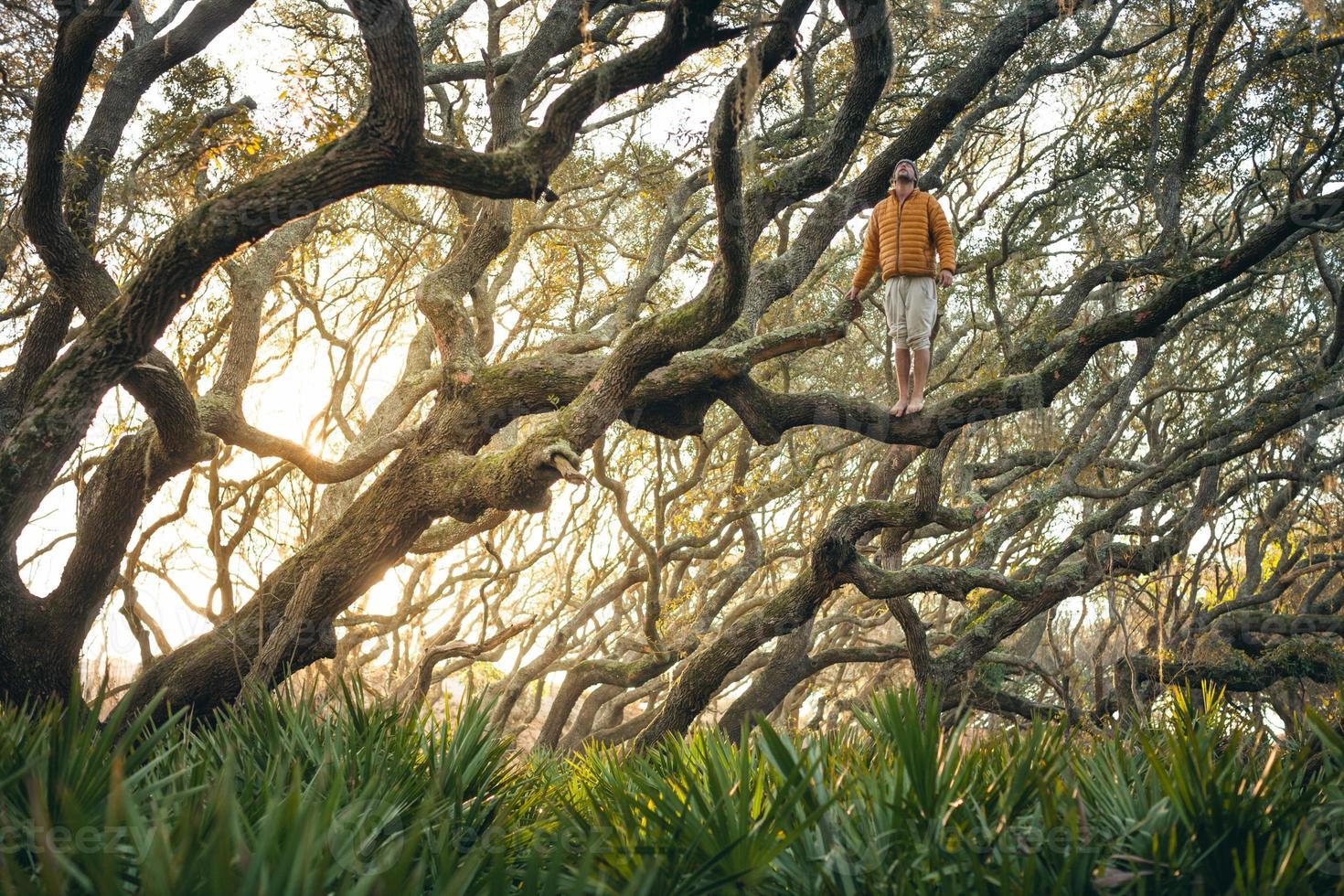 homem solitário fica no galho de árvore ao pôr do sol foto