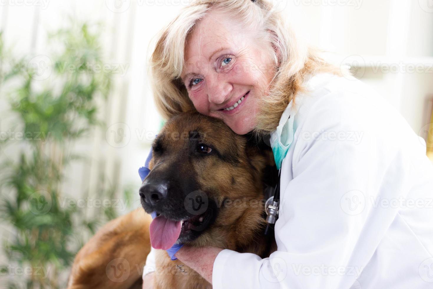 veterinário sênior, abraçando o pastor alemão no escritório foto
