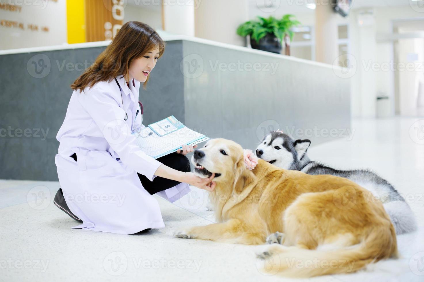 jovem veterinário no hospital foto