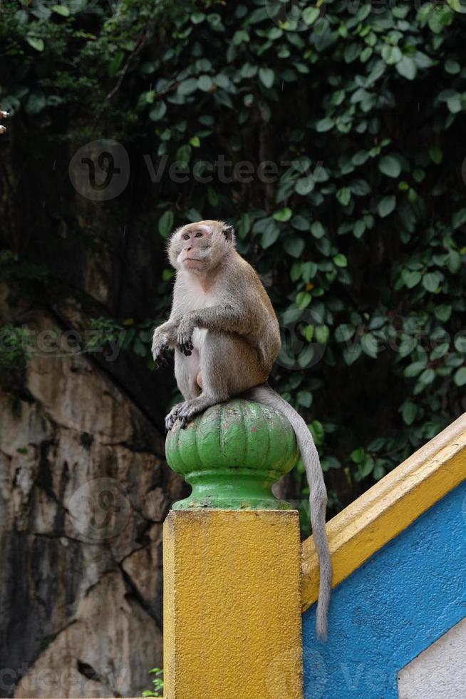 Macaco macho em cavernas Batu foto